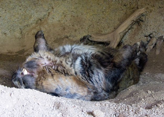 ~snooooooooooore~ | 21 Wombats Who Understand The Struggle Of Constant Tiredness