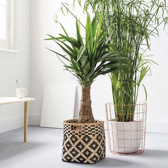 Fris je interieur op! Plaats je plant met pot eens in een rieten mand of draadmand. Leuk hè? #interior #groen #wonen #living
