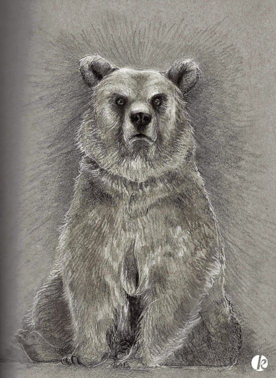 A late night bear sketch to help pass the hours. Graphite and white pencil on grey paper, brought into photoshop. ©Kathleen Ross 2014