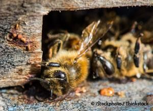 Scientists Discover Fungicide and Pesticide are Killing Bees―and It's Worse Than You Thought