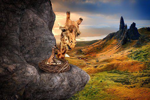 Surreal, Fantasy, Żyrafy, Krajobraz