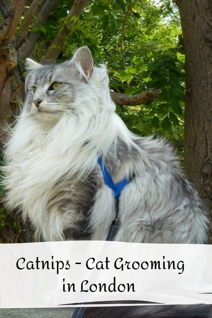 Catnips Cat Grooming Cat Groomer Cats