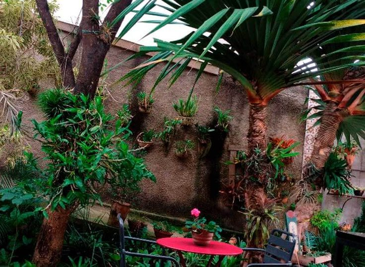 Café e plantas no Ateliê da Cerâmica