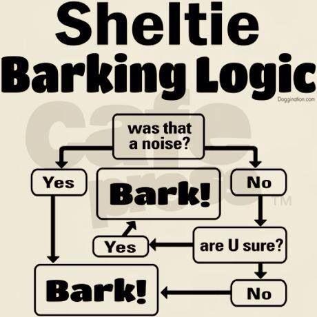 Lol Someone has a Sheltie!