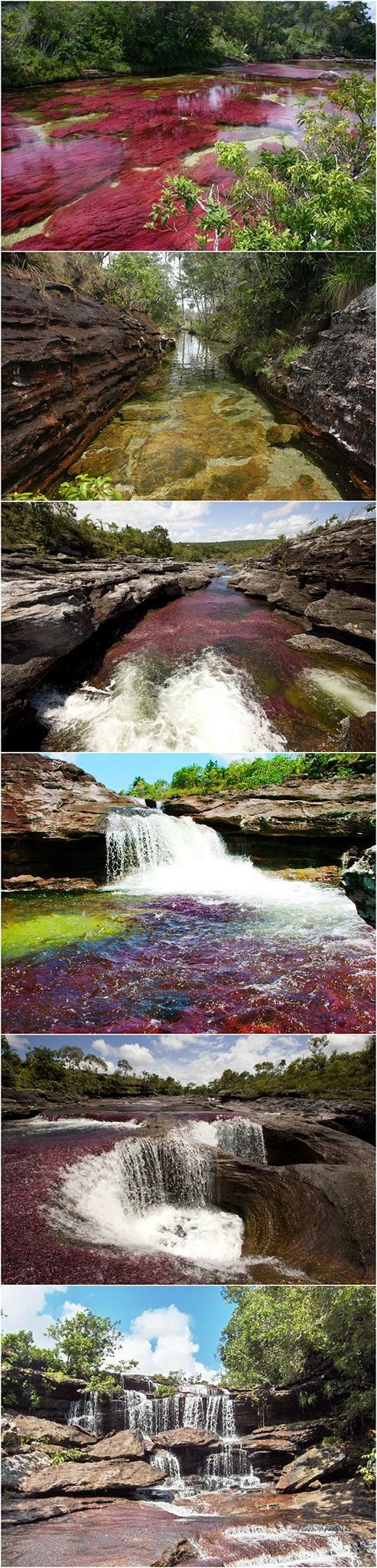 Caño Cristales ou la Rivière de Cristal aux 5 couleurs, Serrania de la Macarena, Colombie.   Considérée comme la plus belle rivière du monde et dont l'eau est sûrement la plus propre de la planète.