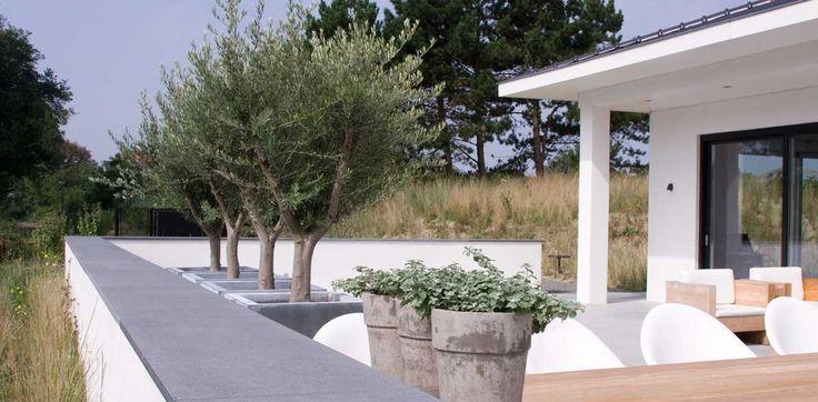Duin tuin zinken bakken met olijfbomen