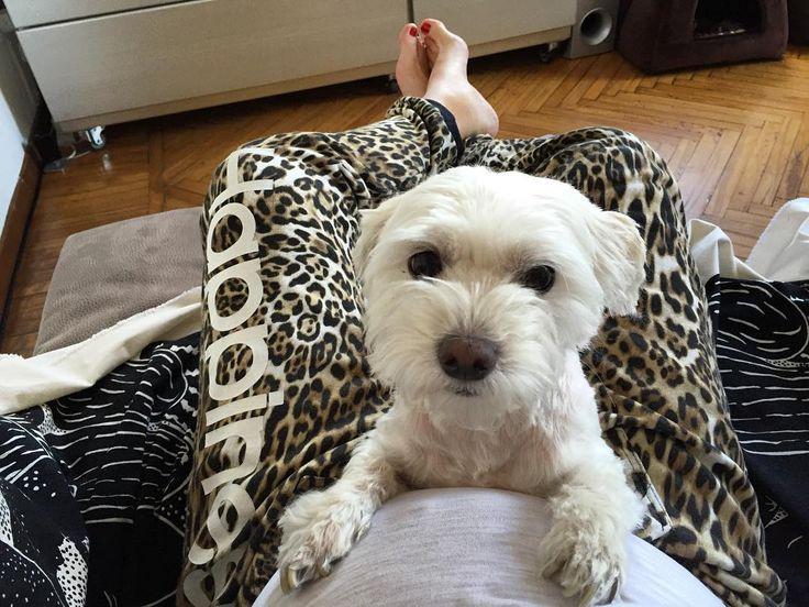 #SaraForesti Sara Foresti: Un cane da guardia  @iosonouma