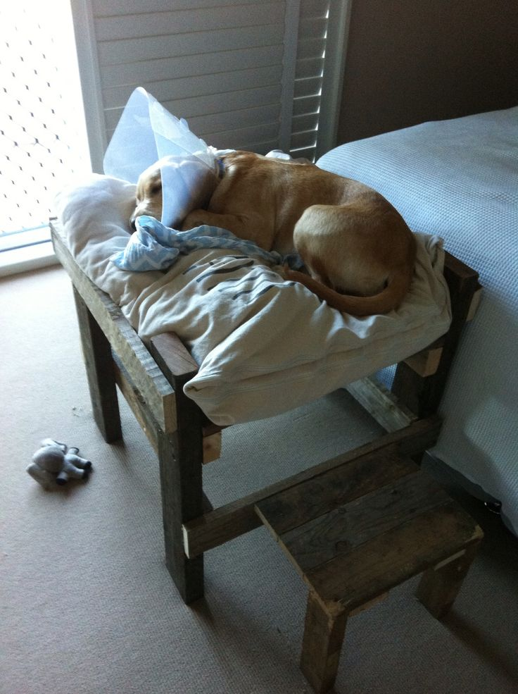 Puppy bed made with recycled timber from old pallets