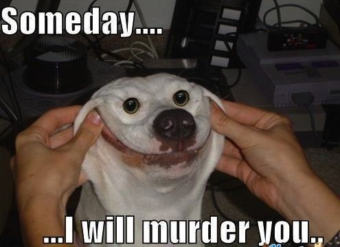 Ridiculously Funny Animal Memes for 2013