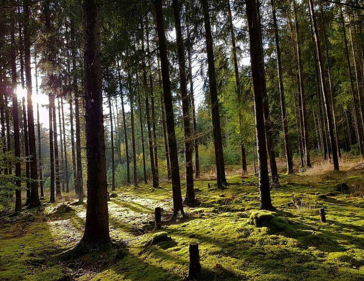 "Polubienia: 2,695, komentarze: 12 – @divine_forest na Instagramie: ""presents __________________________ @_helene.b __________________________ Thank you for sharing…"""