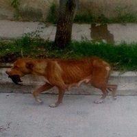 Congreso del estado de jalisco.: NO! al maltrato animal.