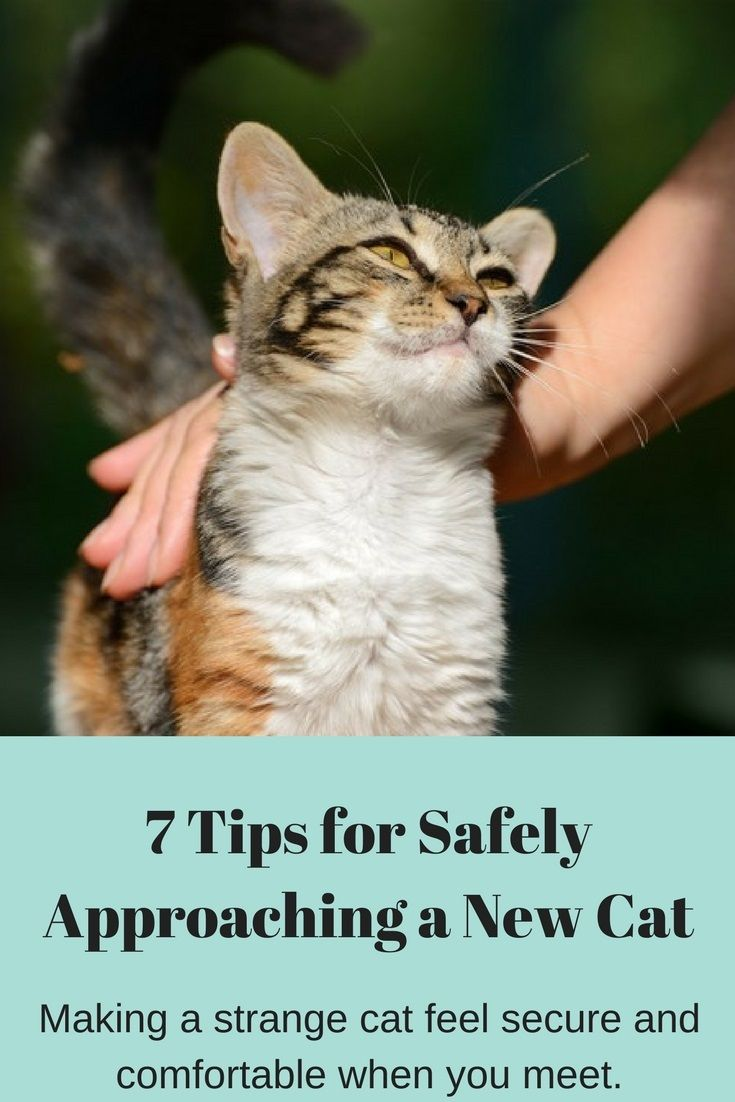 Tips for Approaching a New Cat