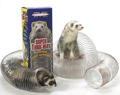 1000+ images about Ferrets on Pinterest | Toys, Jungle gym ...