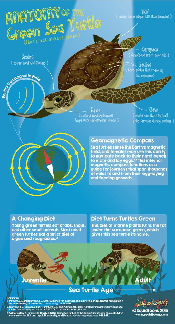 49 Best Marine Biology Comics Images On Pinterest Marine Biology