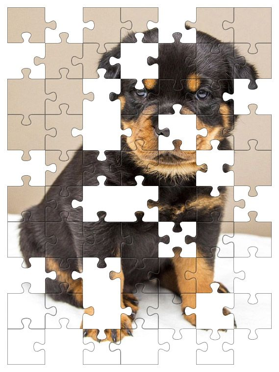 Free Jigsaw Puzzle Online - Rottweiler Puppy