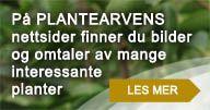 Plantearven