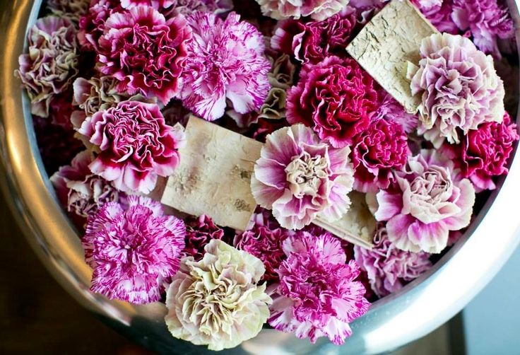 See carnations CAN be beautiful!