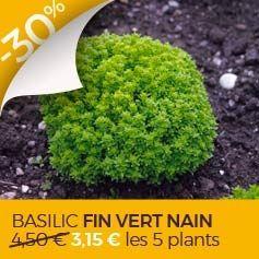 10 légumes perpétuels ou vivaces pour potager sturdy et autonome