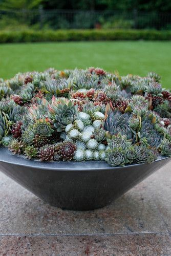 Succulent Bowl Design / repinned on toby designs