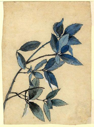 John Ruskin, Study of Leaves, RF1351 © Ruskin Foundation