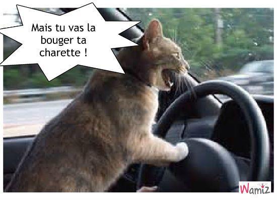 Chat Au Volant Photos De Chats Rigolos Memes Animaliers Chatons Droles