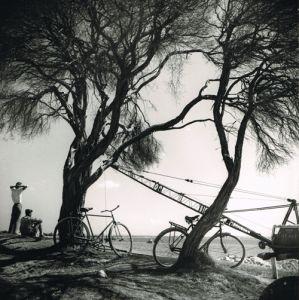 Kernel Landscape . Max Dupain.