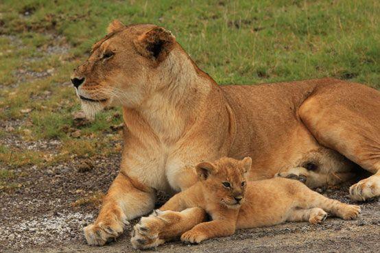 Mother and cub, Ndutu, Serengeti, Tanzania
