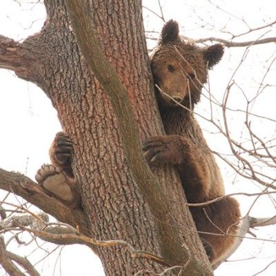 The Bear Sanctuary | Tomorrow Bear