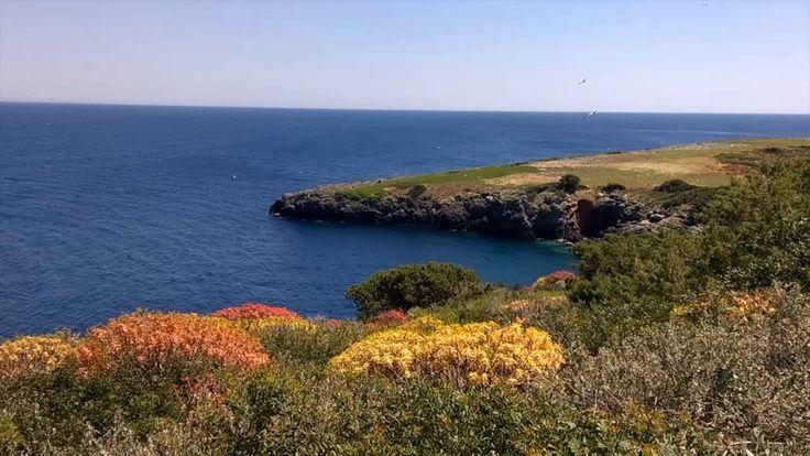 Punta San Francesco. Isola di Giannutri - Saverio Pepe