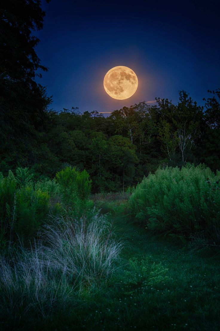 Rising Full Corn Moon - The rising of the full Corn Moon on evening of September 5 2017 from Bill Yeck Park in Centerville Ohio by Jim Crotty