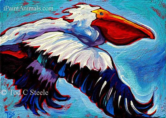 Pelican Art - Siegfrieds Glory - Pelican Art Print from Original Painting by Tod C Steele - 5x7- Bird Art via Etsy