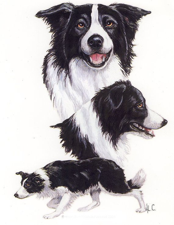 Border Collie Print On Fabric Panels Pillow Quilting by artimps1, $12.99