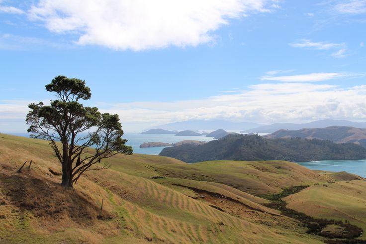 Coromandel - New Zealand