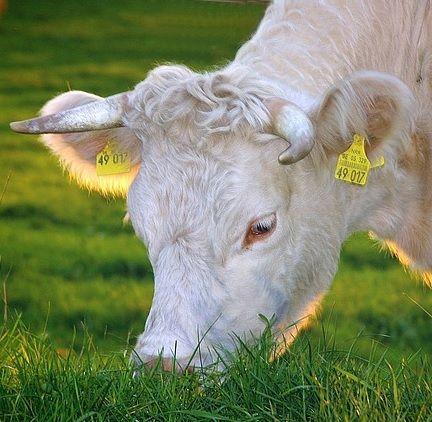 Carne e Ambiente via @mrloto