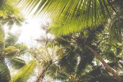 Vintage Palm Leaves Art