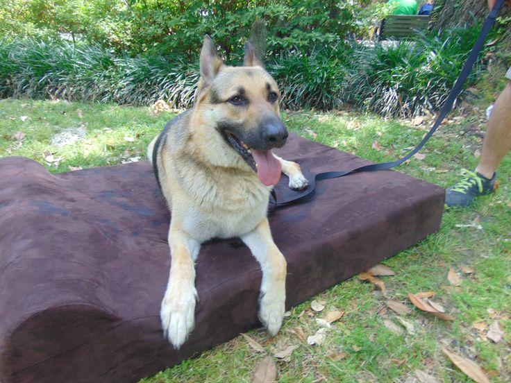 Extra Large Dog Beds For German Shepherds