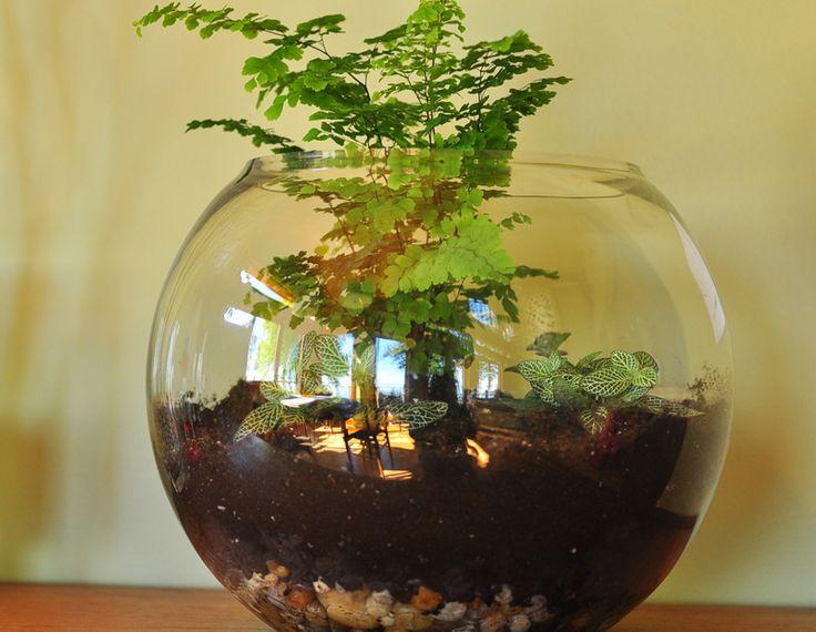 Маленькие сады. Обсуждение на LiveInternet - Российский Сервис Онлайн-Дневников