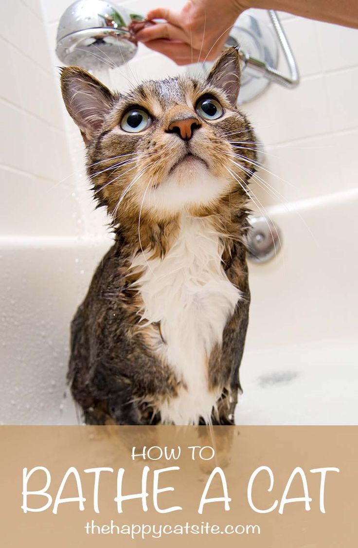 How to bathe a cat - tips and advice, shampoos and equipment