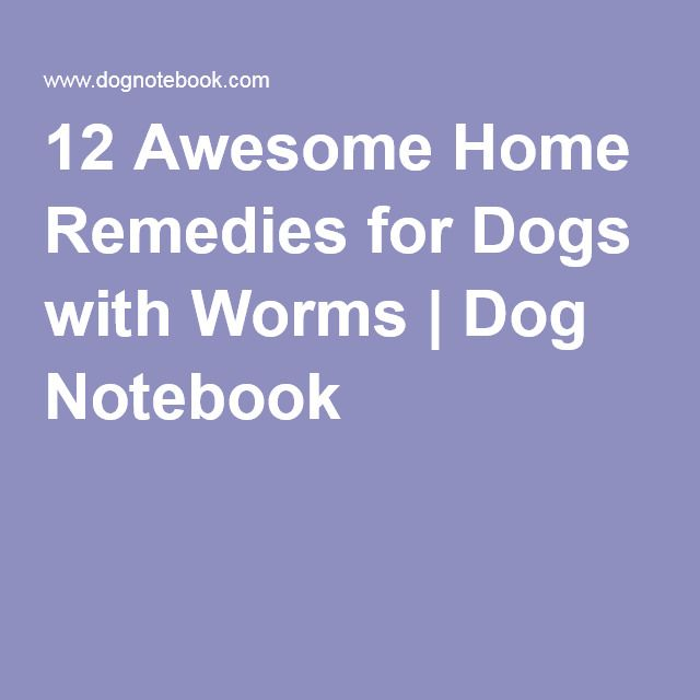 Natural Home Remedies For Dog Worms