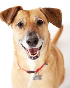 Adopting Former Breeding Dog