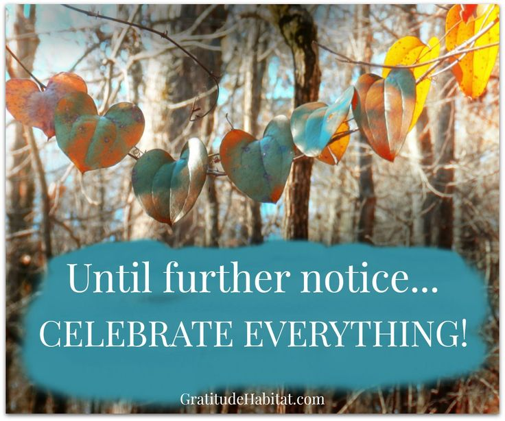 Celebrate Everything! Visit Us At: Www.GratitudeHabitat
