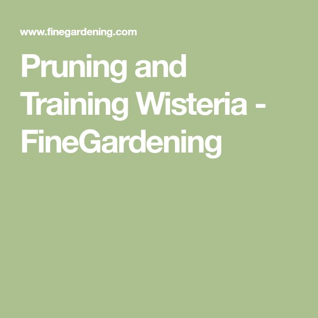 Pruning and Training Wisteria - FineGardening