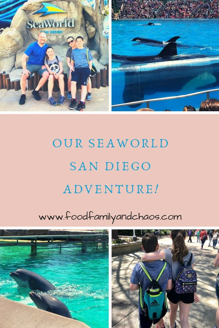 Our Seaworld San Diego Adventure Food Family And Chaos Seaworld San Diego Sea World California Travel Road Trips