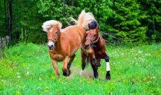 Horses running on field stock photo