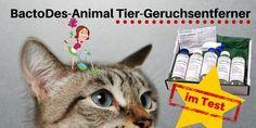 Ich habe den BactoDes-Animal Geruchskiller für euch an einem Katzenklo getestet. Katzenurin ✓ Geruch ✓ Katzenklo ✓ Test ✓