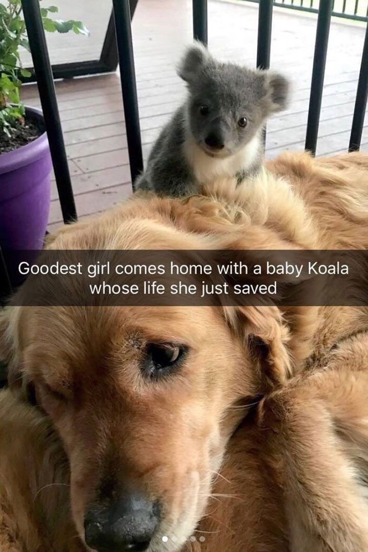 30 cute pictures of animals with captions to make your day better … – Renate Karl