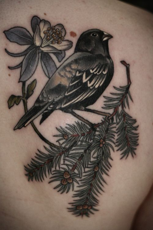 Blue spruce, lark bunting, and columbine flower for a native Coloradan by Kristen at Wonderland Tattoo