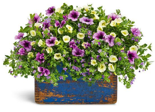 Love these colors together...recipe included.  Love the planter, too.