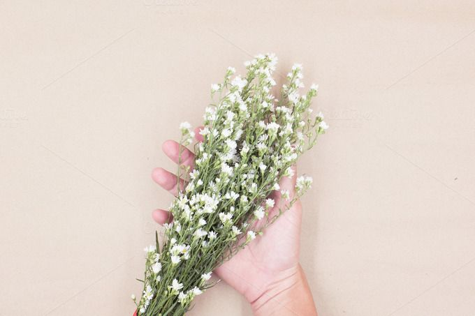 Flowers in hand by ptystockphoto on @creativemarket