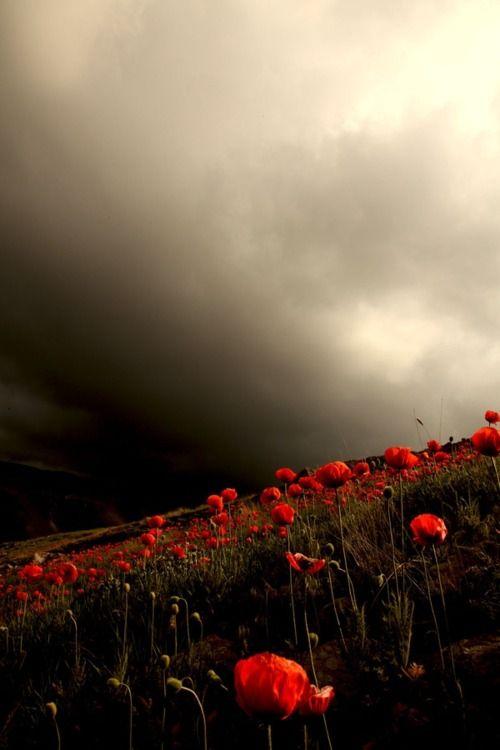 poppyRed Flower, Stormy Sky, Fields Flower, Poppies Fields, Red Poppies, Beautiful, Storms Clouds, Flower Gardens, Wizards Of Oz